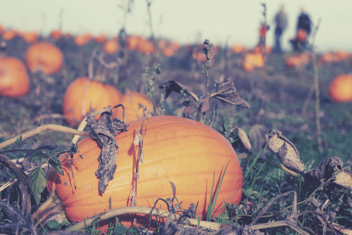 HALLOWEEN 2020: Ideas and things to do this Halloween- Visit a pumpkin patch